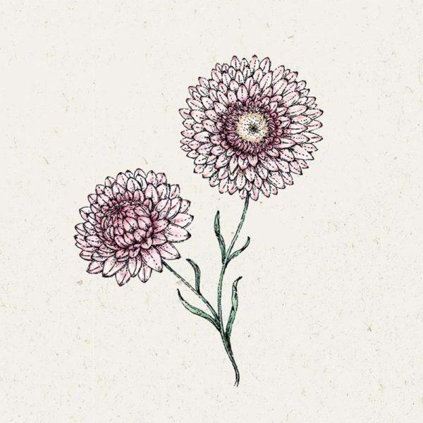 Grußkarte mit Samen Silvery Rose'