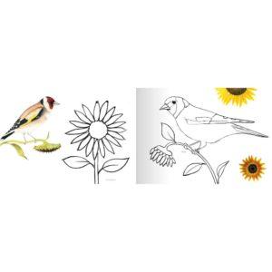 Naturmalbuch aus Graspapier von Brigitte Baldrian