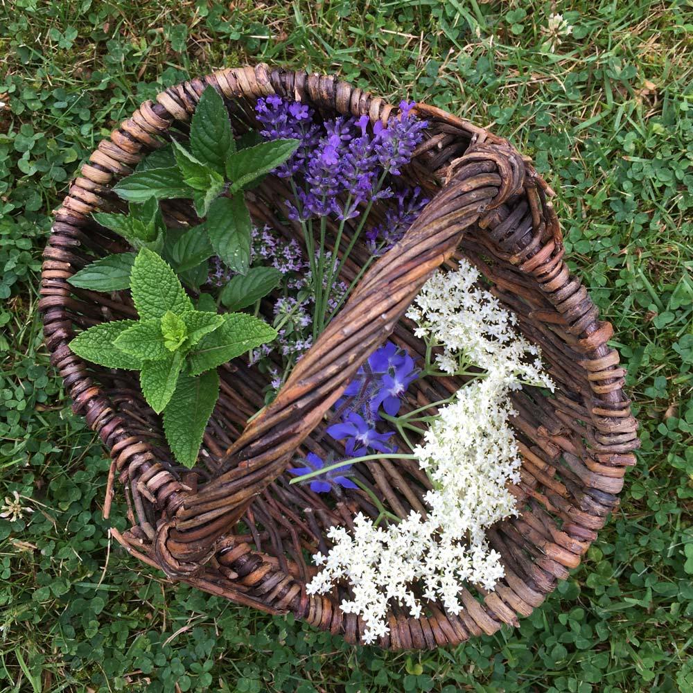 Essbare Blüten und Kräuter für selbstgemachtes Eis