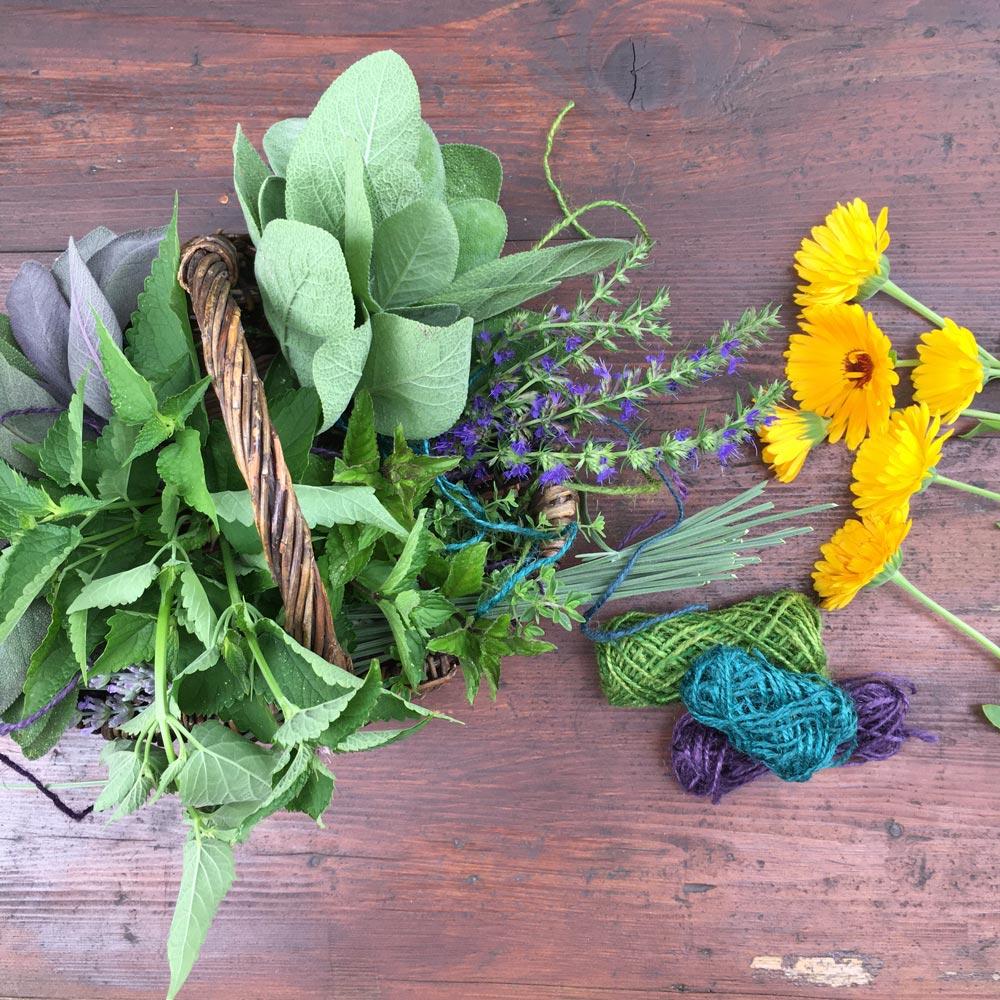 Kräuter sammeln im Garten und in der Natur