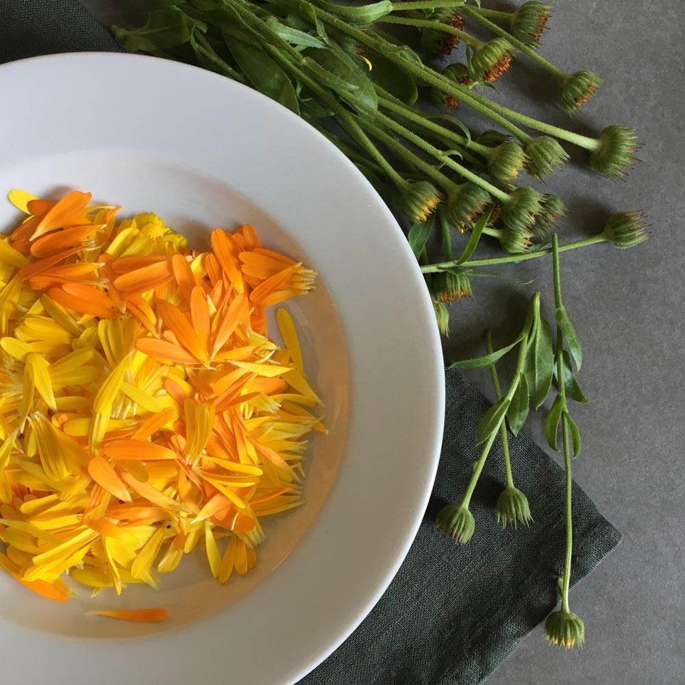 Blütenblätter für selbstgemachte Ringelblumensalbe
